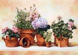 """Στον μικρό """"κήπο"""" του σπιτιού σας"""