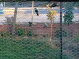 fotos voladera exterior Th_63973_15072009_007_122_29lo